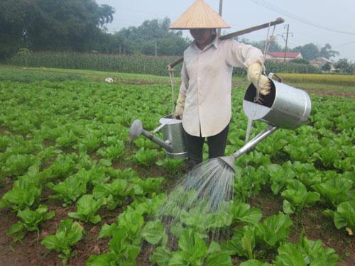Huyện Kỳ Sơn: Tốp đầu phong trào sản xuất vụ đông