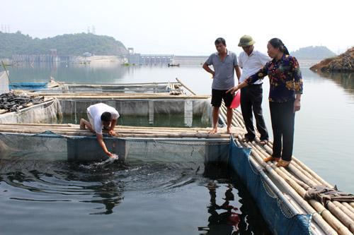 Cá sạch sông Đà