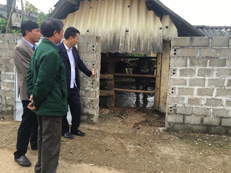 Kiểm tra công tác phòng – chống đói rét cho gia súc tại 2 huyện Cao Phong, Kỳ Sơn