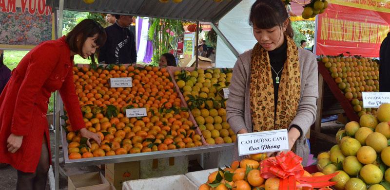Vùng cam Cao Phong hân hoan đón Tết