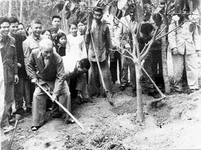 Chủ tịch Hồ Chí Minh với Tết trồng cây
