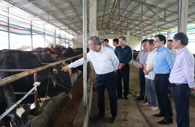 Sở NN&PTNT kiểm tra sản xuất vụ đông xuân tại huyện Lạc Thủy