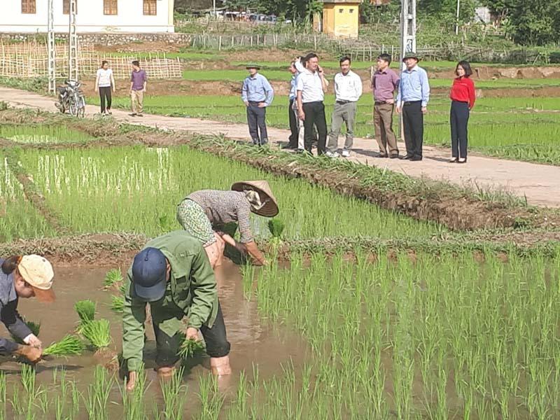 Kiểm tra sản xuất tại huyện Mai Châu