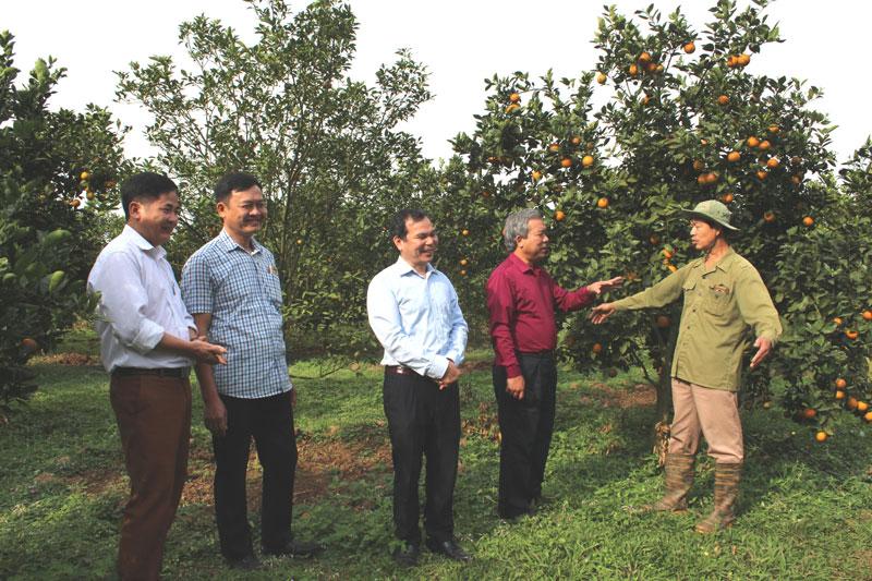 Huyện Kim Bôi đẩy mạnh chuyển đổi cơ cấu cây trồng trong sản xuất nông nghiệp