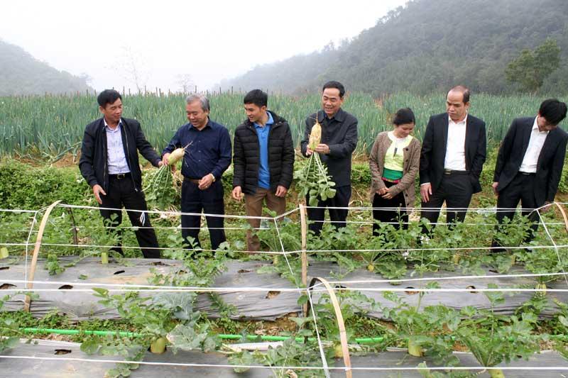 Đồng Chí Nguyễn Văn Quang, Chủ tịch ủy ban nhân dân tỉnh Hòa Bình thăm vùng sản xuất rau xã Quyết Chiến