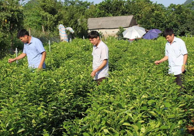Kim Bôi đẩy mạnh tái cơ cấu ngành nông nghiệp