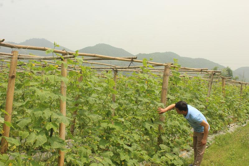 Huyện Kim Bôi có 21 hợp tác xã hoạt động theo Luật có hiệu quả