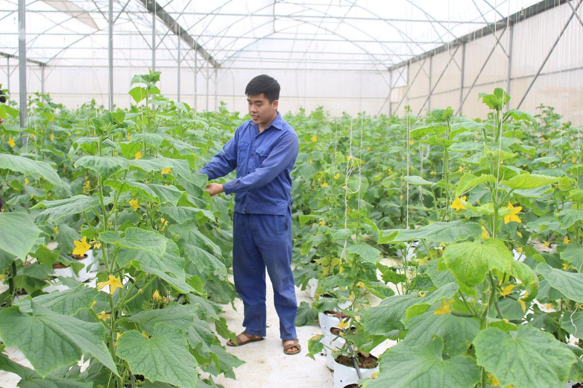 Khởi sắc nông nghiệp xanh, thực phẩm sạch