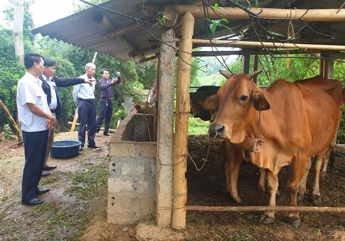 Kiểm tra công tác phòng, chống dịch bệnh trên đàn vật nuôi tại huyện Cao Phong