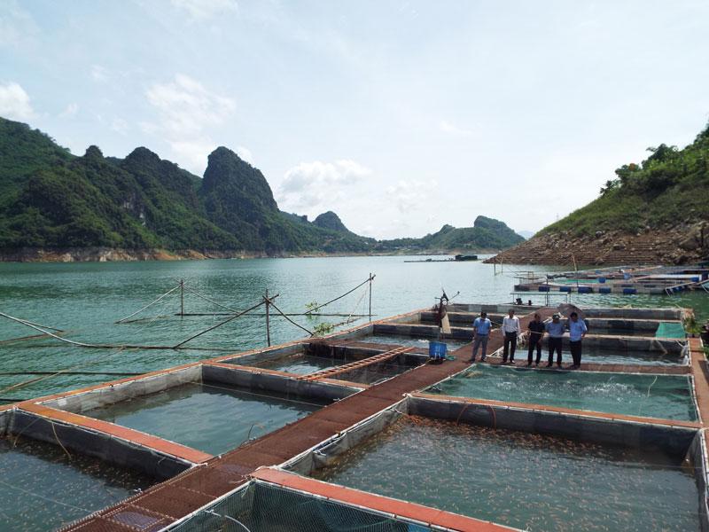 Trên khu vực hồ Hòa Bình có nhiều doanh nghiệp tham gia nuôi cá sông Đà theo chuỗi giá trị. Ảnh: Đoàn công tác của Bộ NN&PTNT khảo sát mô hình liên kết nuôi cá sông Đà tại xã Thái Thịnh (TP Hòa Bình).