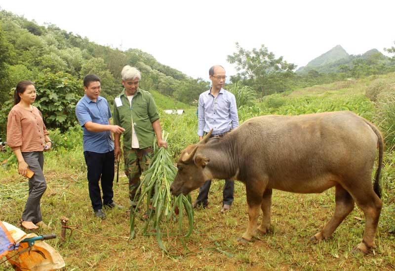 Huyện Đà Bắc: Tín dụng chính sách cùng người nghèo vượt khó