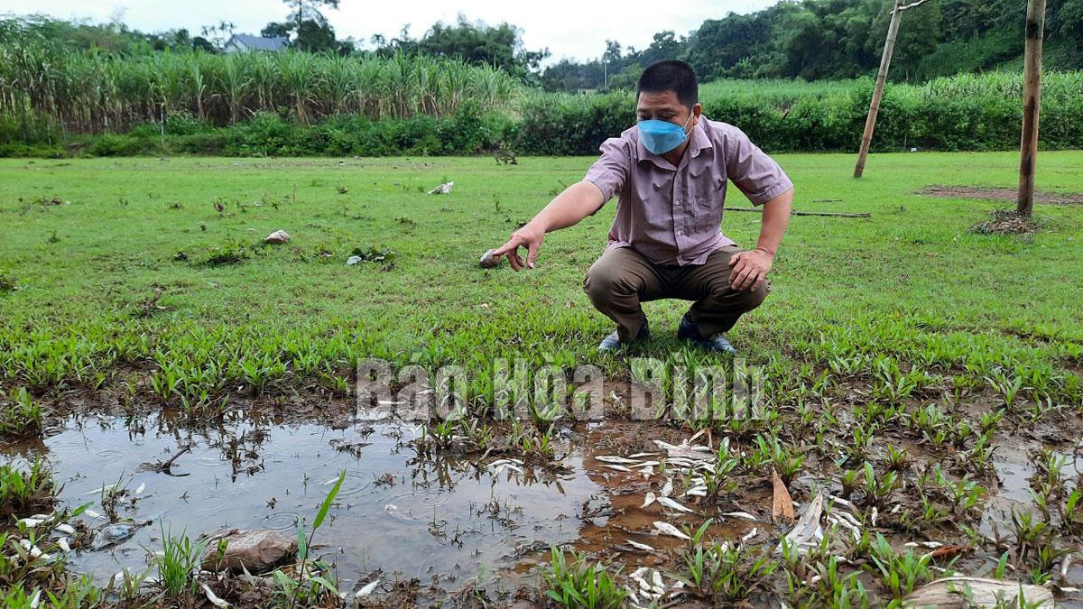 Cần làm rõ hiện tượng cá chết tại suối Cái, xã Dũng Phong