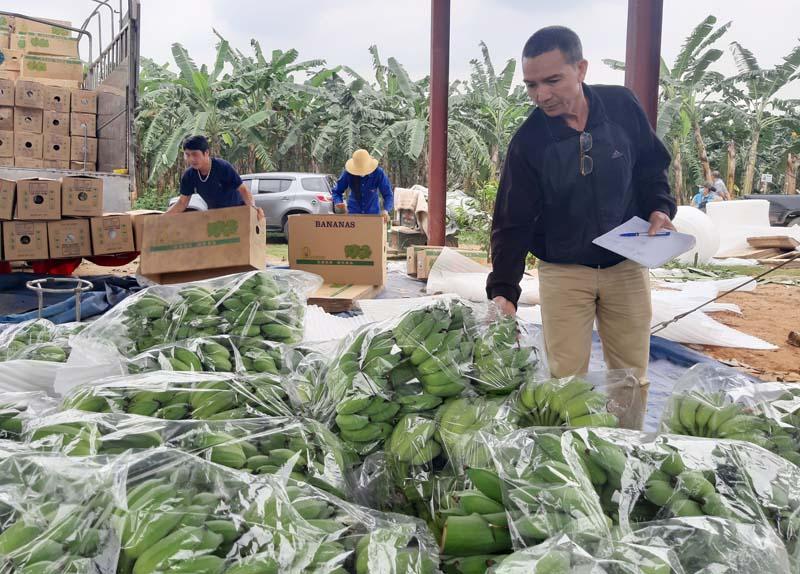 Mở hướng cho sản phẩm nông nghiệp xuất khẩu